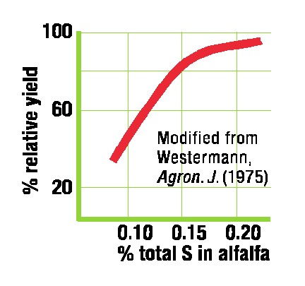 Agronomy Journal Positive Yield Impact from use of Gypsum